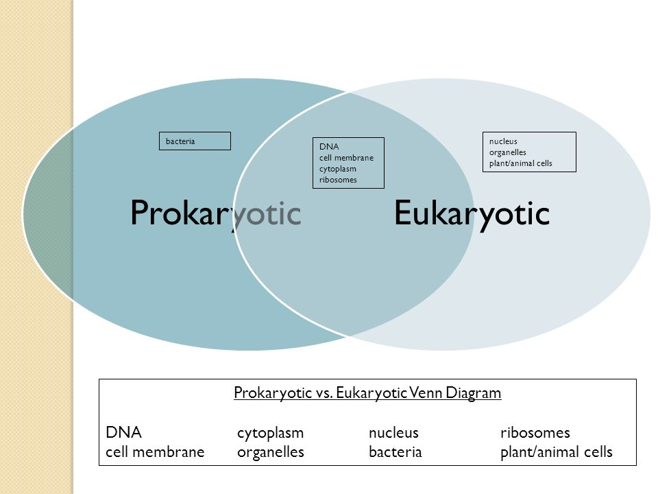 Compare Prokaryotic And Eukaryotic Cells Venn Diagram Ukran