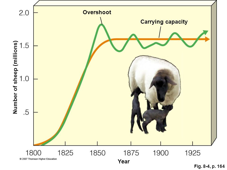 Fig. 8-4, p. 164 Carrying capacity Year Number of sheep (millions) Overshoot