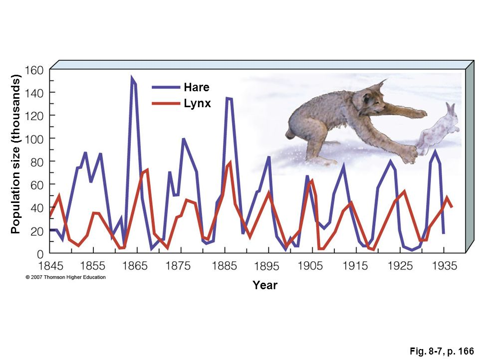Fig. 8-7, p. 166 Population size (thousands) Year Lynx Hare