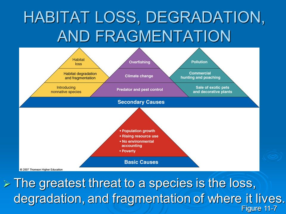 HABITAT LOSS, DEGRADATION, AND FRAGMENTATION  The greatest threat to a species is the loss, degradation, and fragmentation of where it lives.