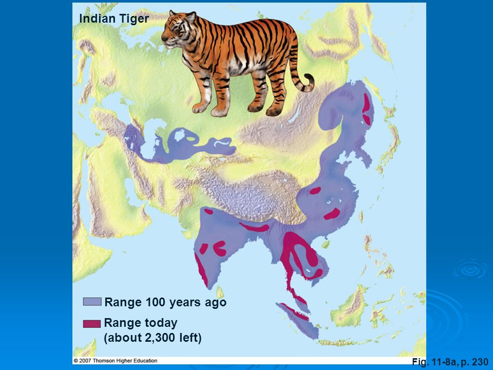 Fig. 11-8a, p. 230 Range 100 years ago Indian Tiger Range today (about 2,300 left)