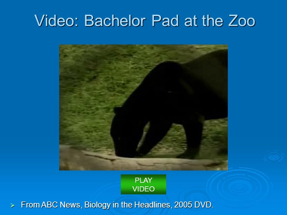 Video: Bachelor Pad at the Zoo  From ABC News, Biology in the Headlines, 2005 DVD. PLAY VIDEO