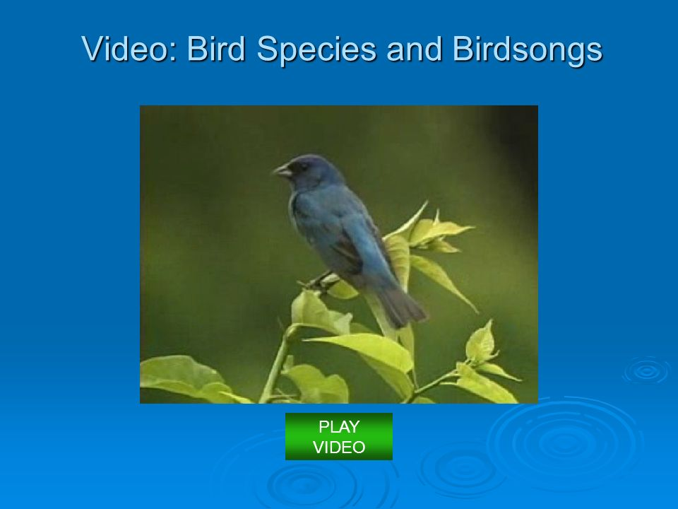 Video: Bird Species and Birdsongs PLAY VIDEO