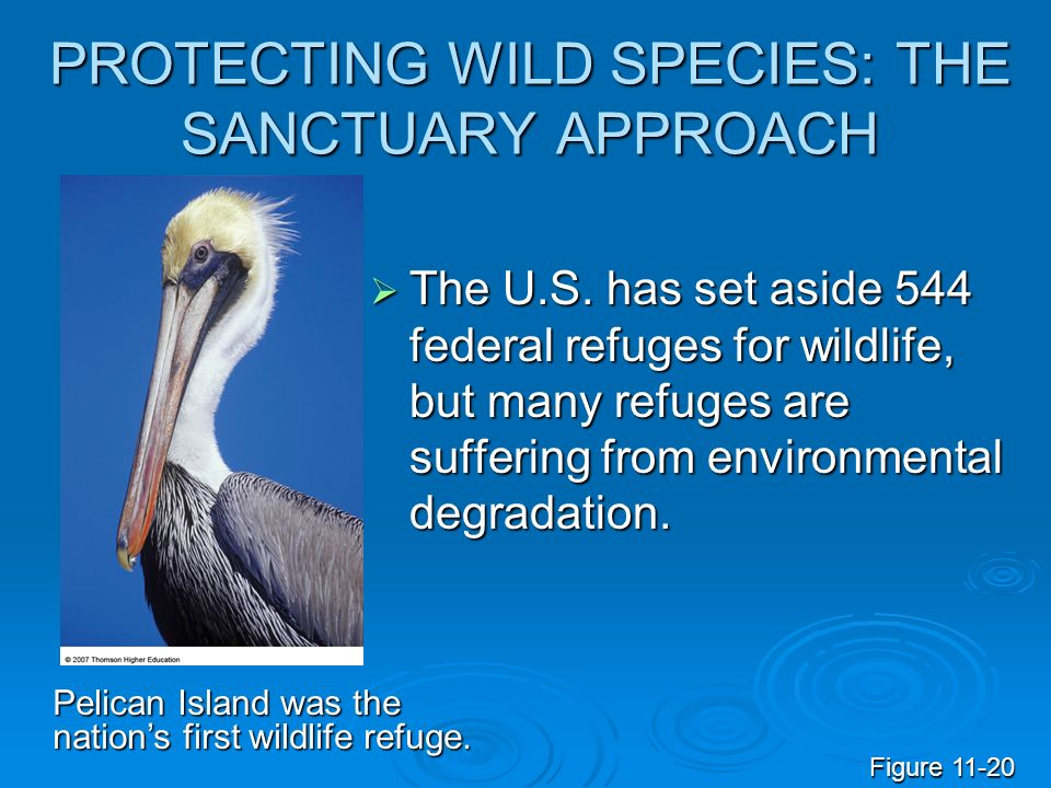 PROTECTING WILD SPECIES: THE SANCTUARY APPROACH  The U.S.