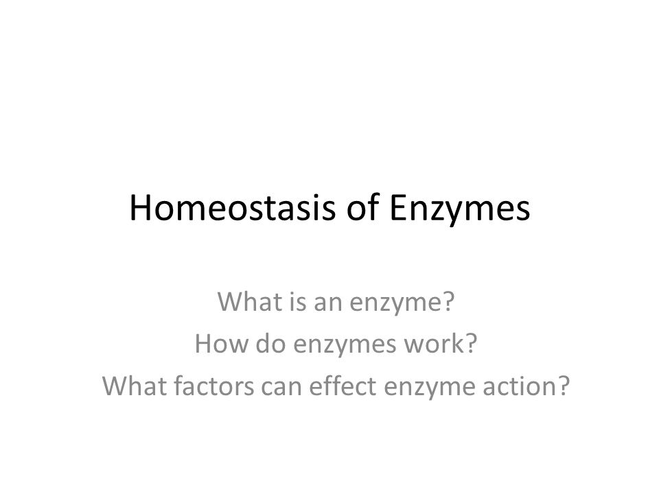 Homeostasis of Enzymes What is an enzyme. How do enzymes work.