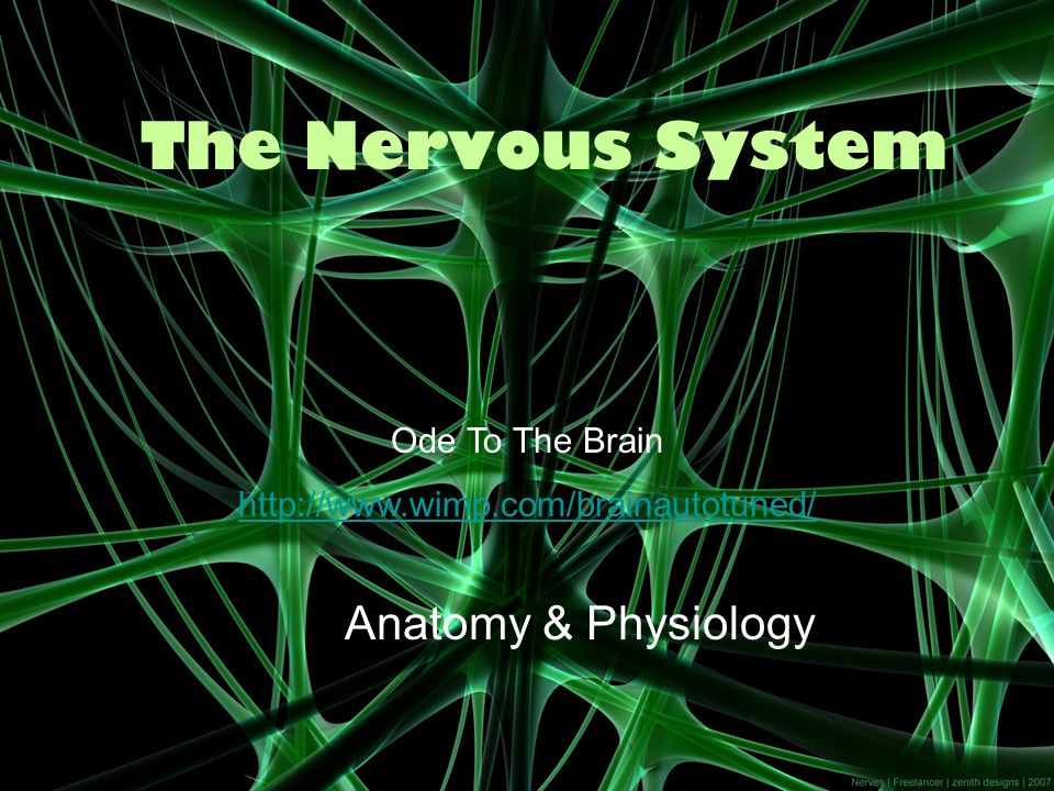 The Nervous System Anatomy & Physiology Ode To The Brain