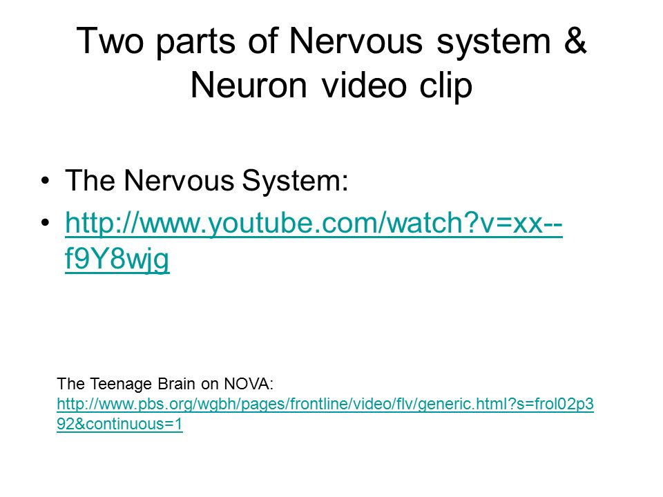 Two parts of Nervous system & Neuron video clip The Nervous System:   v=xx-- f9Y8wjghttp://  v=xx-- f9Y8wjg The Teenage Brain on NOVA:   s=frol02p3 92&continuous=1   s=frol02p3 92&continuous=1