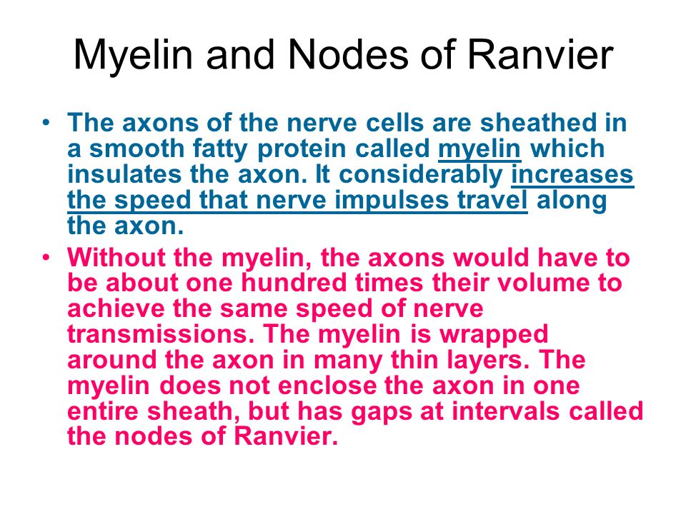 Myelin and Nodes of Ranvier The axons of the nerve cells are sheathed in a smooth fatty protein called myelin which insulates the axon.
