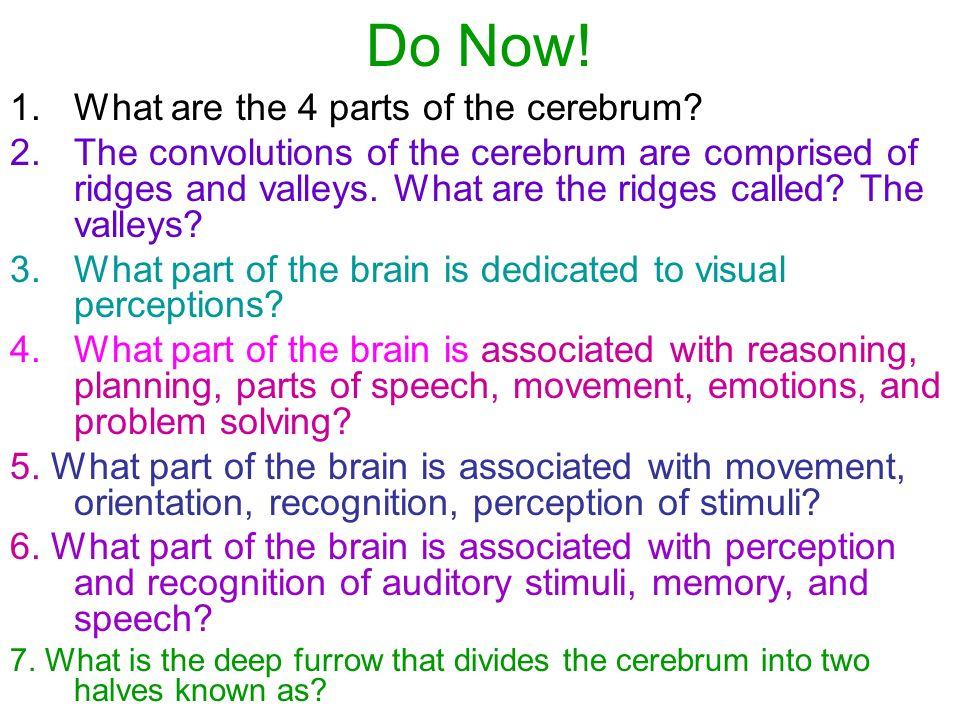 Do Now. 1.What are the 4 parts of the cerebrum.