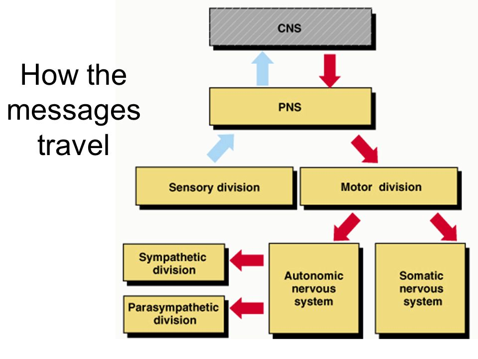 How the messages travel