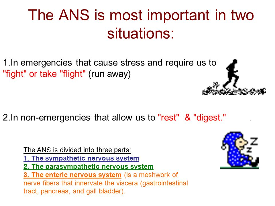 1.In emergencies that cause stress and require us to fight or take flight (run away) 2.In non-emergencies that allow us to rest & digest. .