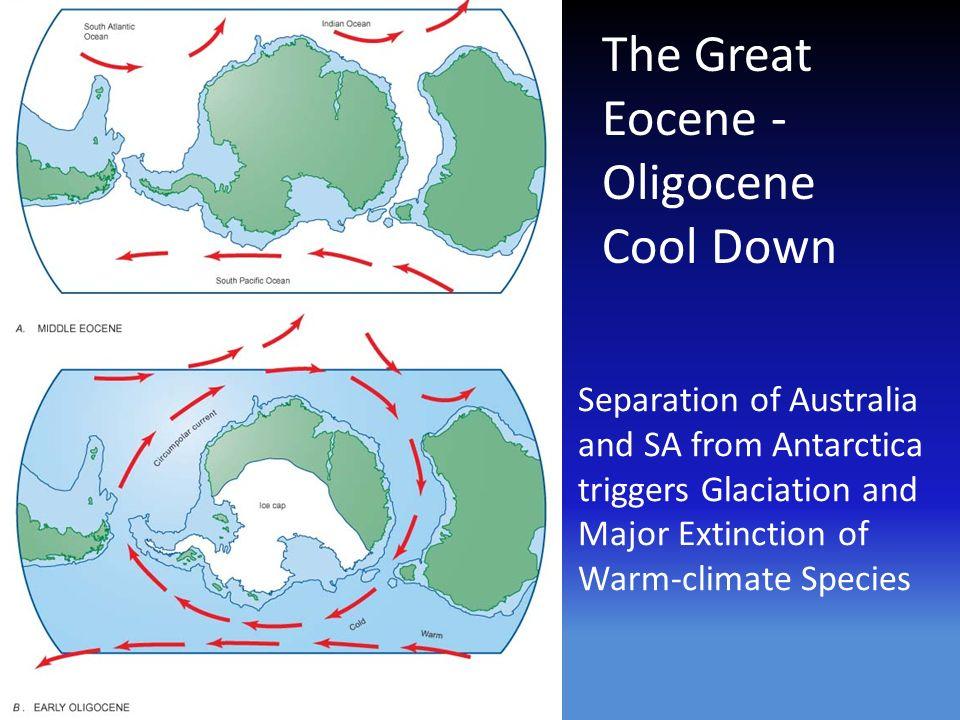 Resultado de imagem para Antarctic Circumpolar Current eocene