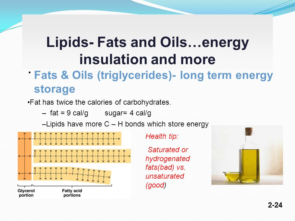 Euro Fed Lipid A lively network for lipidsfats and oils