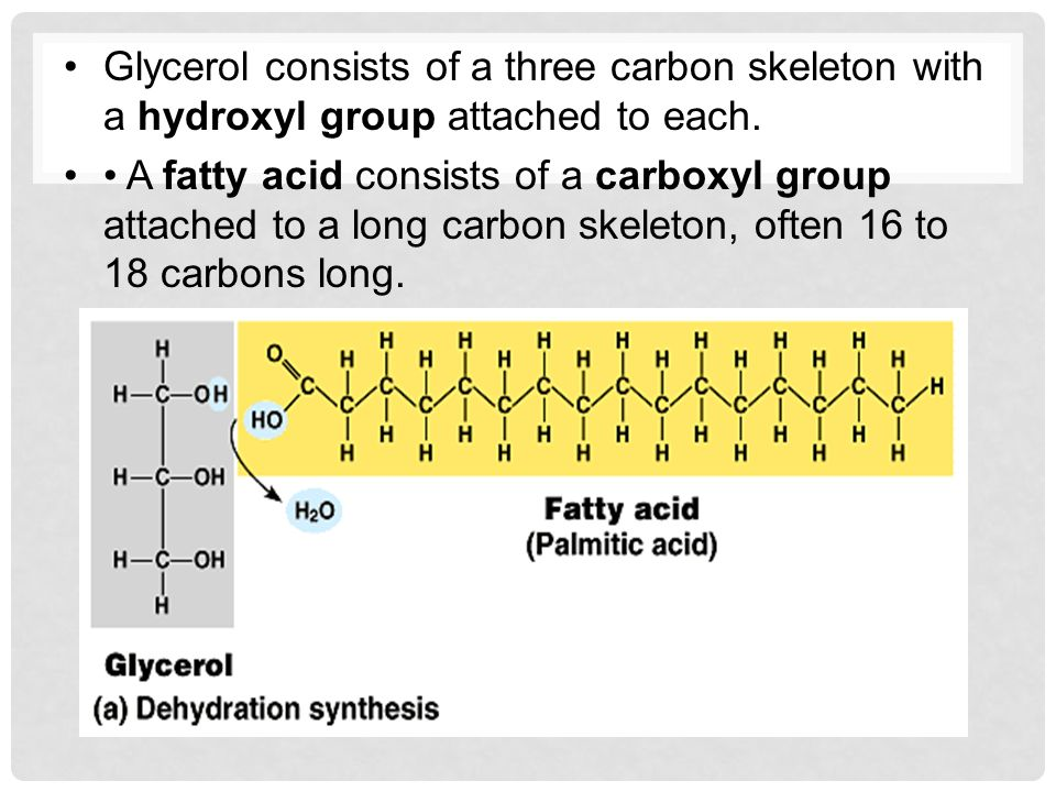 Glycerol consists of a three carbon skeleton with a hydroxyl group attached to each.