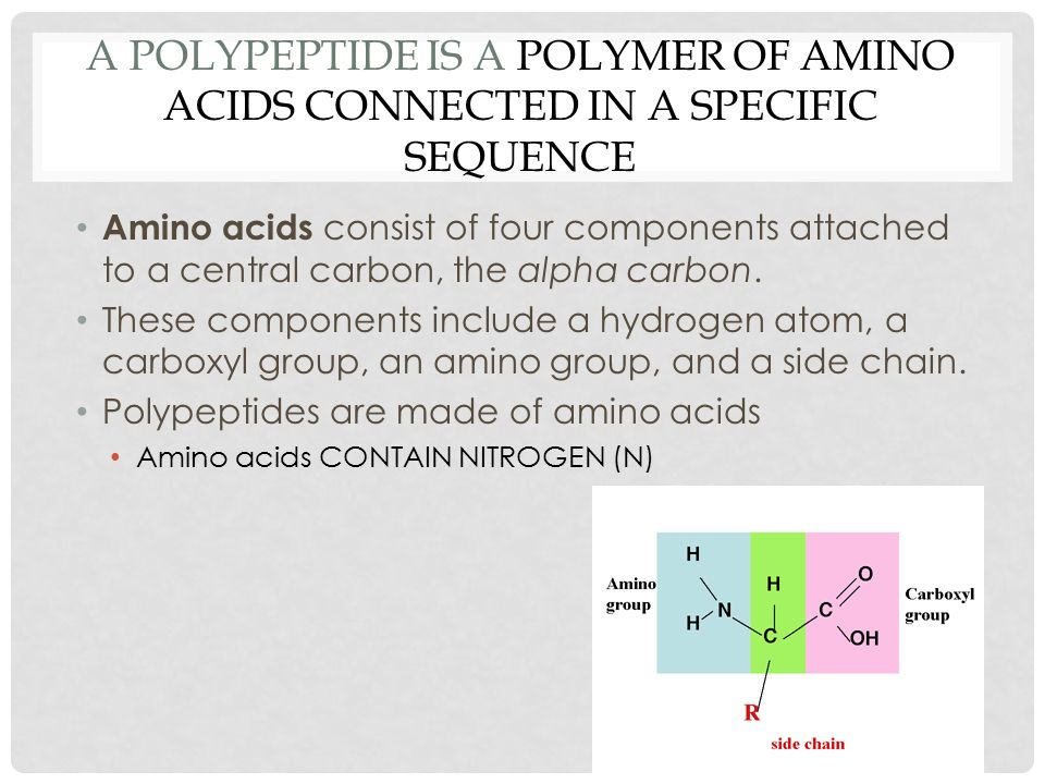 A POLYPEPTIDE IS A POLYMER OF AMINO ACIDS CONNECTED IN A SPECIFIC SEQUENCE Amino acids consist of four components attached to a central carbon, the alpha carbon.