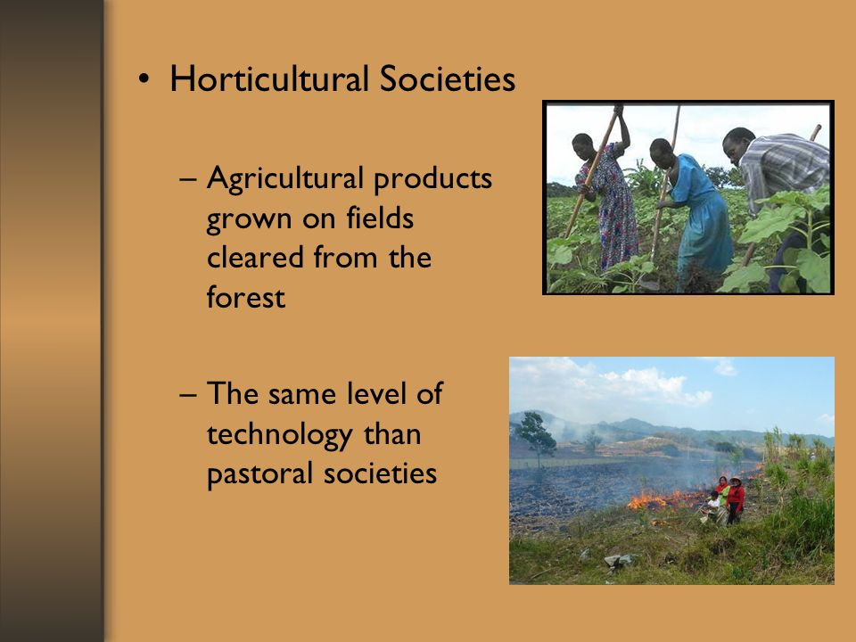 Horticultural Societies –Agricultural products grown on fields cleared from the forest –The same level of technology than pastoral societies