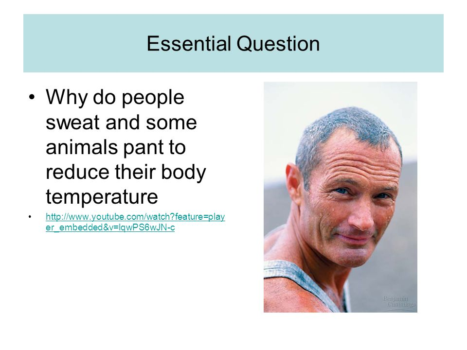Essential Question Why do people sweat and some animals pant to reduce their body temperature http://www.youtube.com/watch feature=play er_embedded&v=lqwPS6wJN-chttp://www.youtube.com/watch feature=play er_embedded&v=lqwPS6wJN-c
