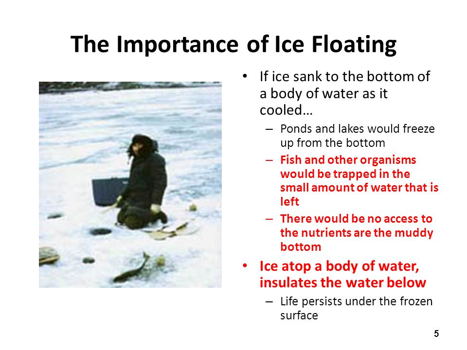5 The Importance of Ice Floating If ice sank to the bottom of a body of water as it cooled… – Ponds and lakes would freeze up from the bottom – Fish and other organisms would be trapped in the small amount of water that is left – There would be no access to the nutrients are the muddy bottom Ice atop a body of water, insulates the water below – Life persists under the frozen surface