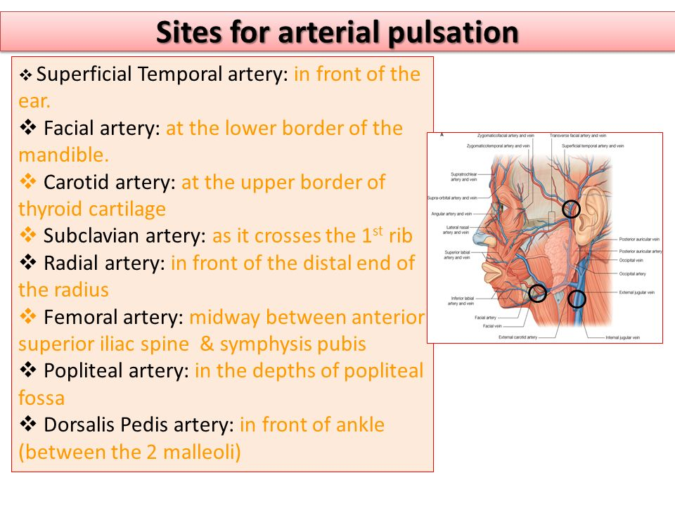 Sites for arterial pulsation  Superficial Temporal artery: in front of the ear.  Facial artery: at the lower border of the mandible.  Carotid arter
