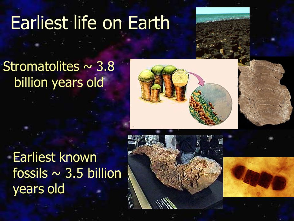 Theories on the Origin of Life. When did life form? Age of the ...