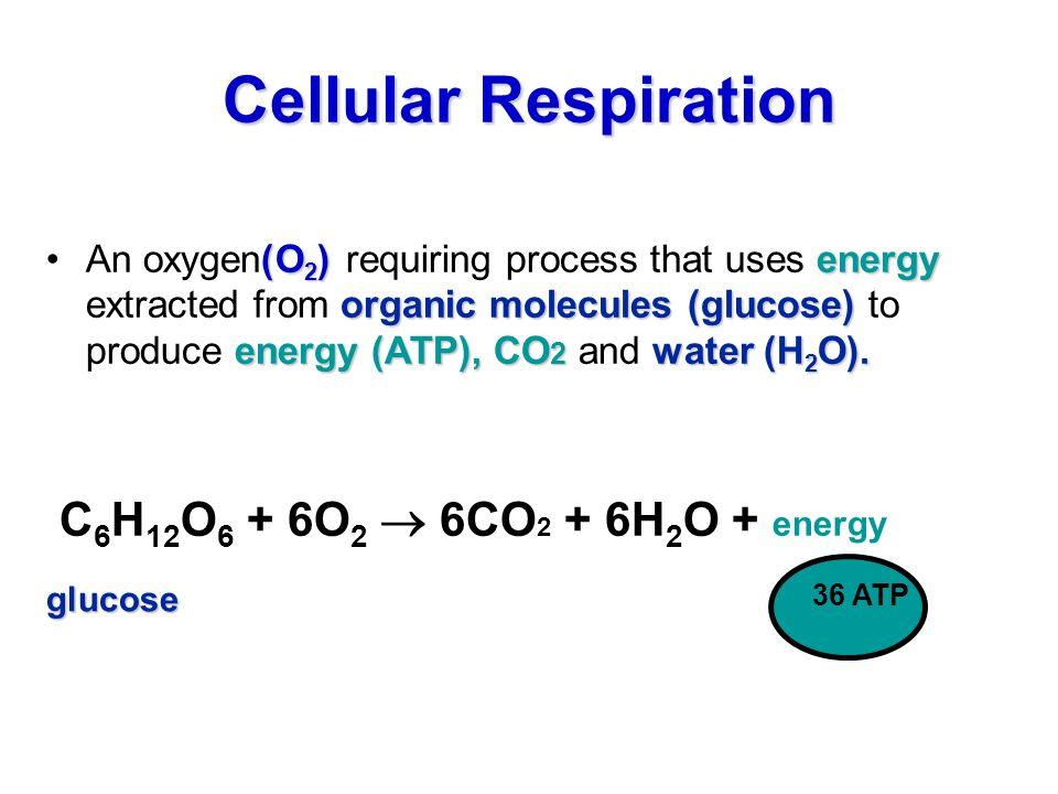 Cellular Respiration. (O 2 )energy organic molecules (glucose ...