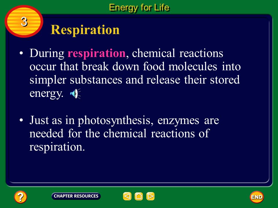 Respiration Some of the energy from the food you eat is used to make you move.