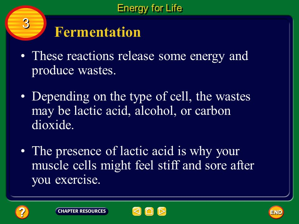 Fermentation Again, as the glucose molecules are broken down, energy is released.