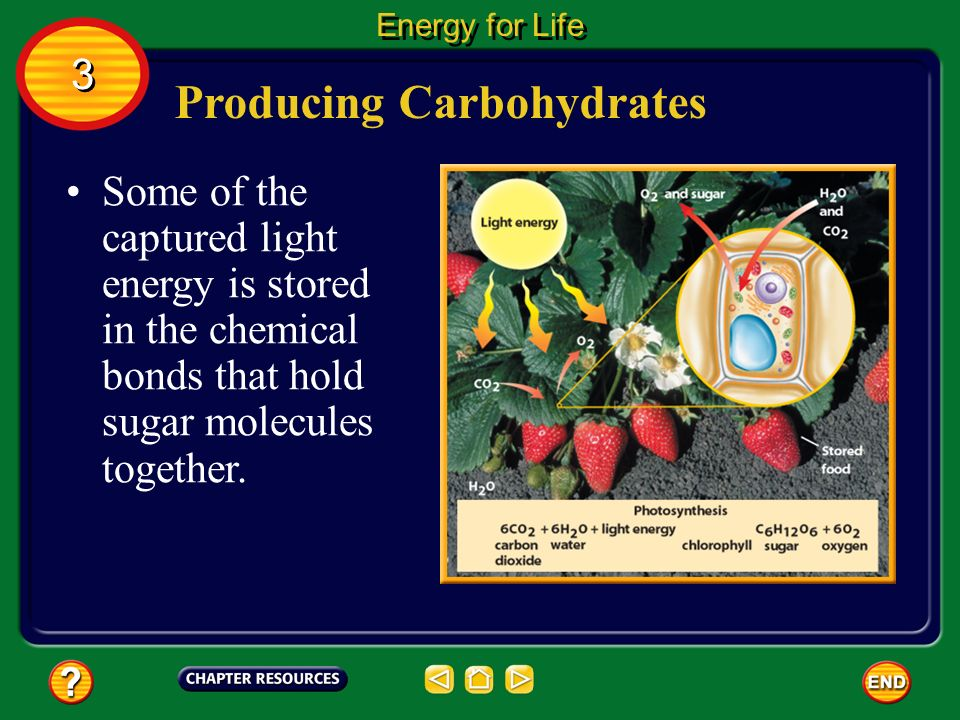 Producing Carbohydrates The captured light energy is used to drive chemical reactions during which the raw materials, carbon dioxide and water, are used to produce sugar and oxygen.