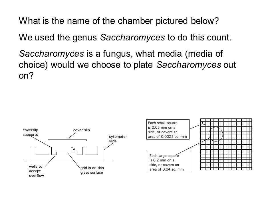 What is the name of the chamber pictured below. We used the genus Saccharomyces to do this count.