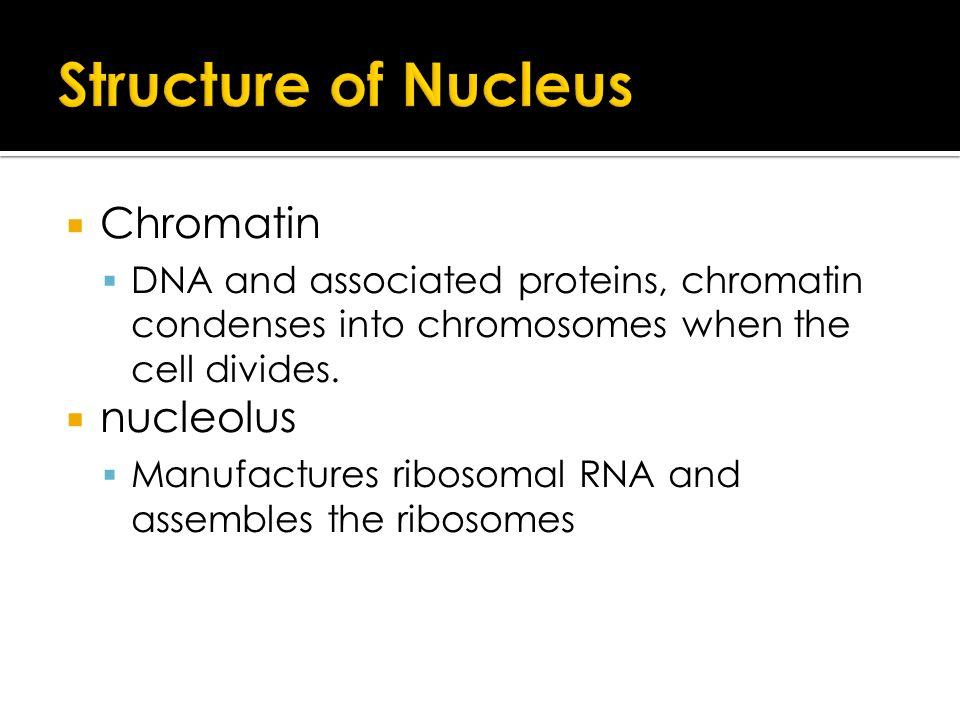OCR AS Biology Unit 1: Cells, Exchange and Transport. - ppt download