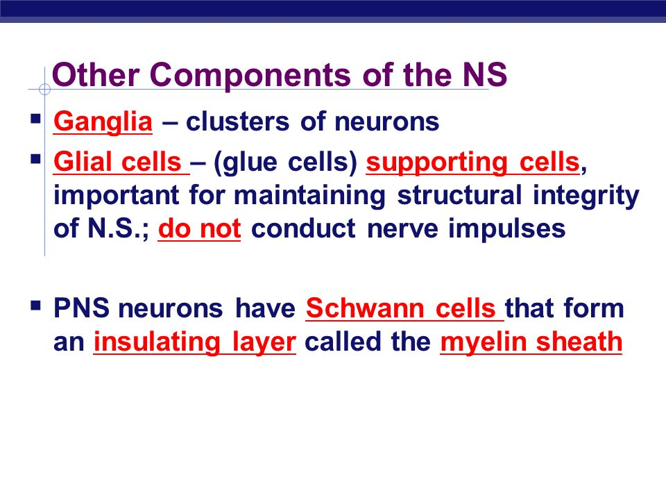 AP Biology Neurons  Cells responsible for transmission of nervous system information  Many different types eg.