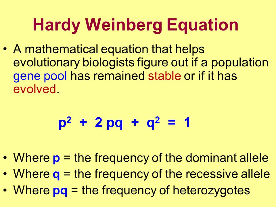 Hardy Weinberg Equation A mathematical equation that helps evolutionary biologists figure out if a population gene pool has remained stable or if it has evolved.