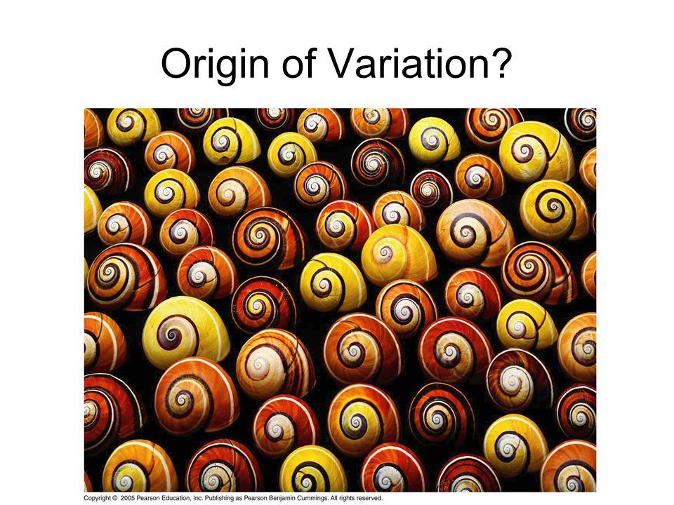 Origin of Variation