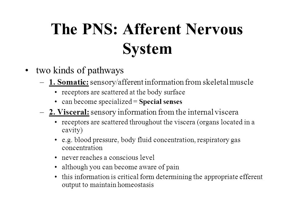 The PNS: Afferent Nervous System two kinds of pathways –1.