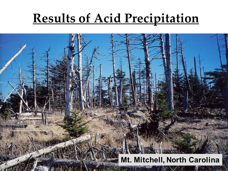 12 Results of Acid Precipitation Mt. Mitchell, North Carolina