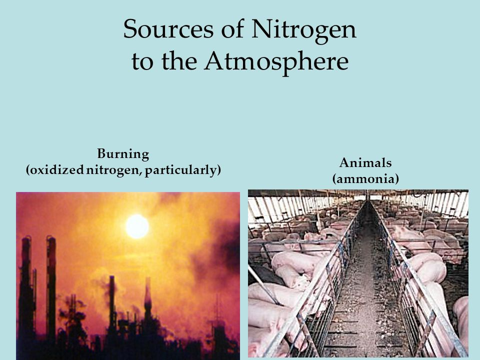 21 Sources of Nitrogen to the Atmosphere Burning (oxidized nitrogen, particularly) Animals (ammonia)