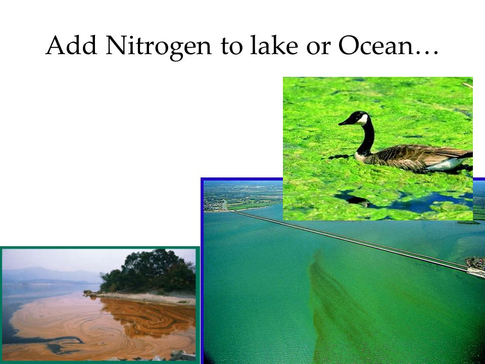 7 Add Nitrogen to lake or Ocean…