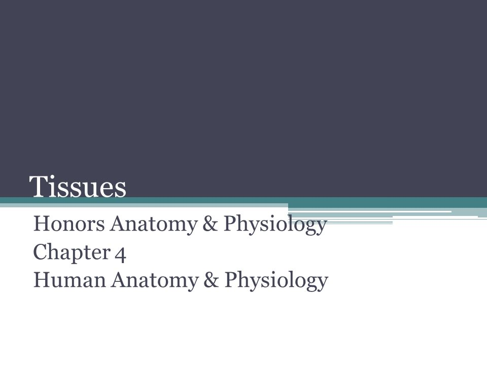 Tissues Honors Anatomy & Physiology Chapter 4 Human Anatomy ...
