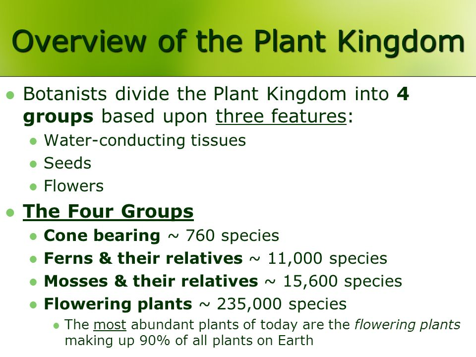 Overview of the Plant Kingdom Botanists divide the Plant Kingdom into 4 groups based upon three features: Water-conducting tissues Seeds Flowers The Four Groups Cone bearing ~ 760 species Ferns & their relatives ~ 11,000 species Mosses & their relatives ~ 15,600 species Flowering plants ~ 235,000 species The most abundant plants of today are the flowering plants making up 90% of all plants on Earth