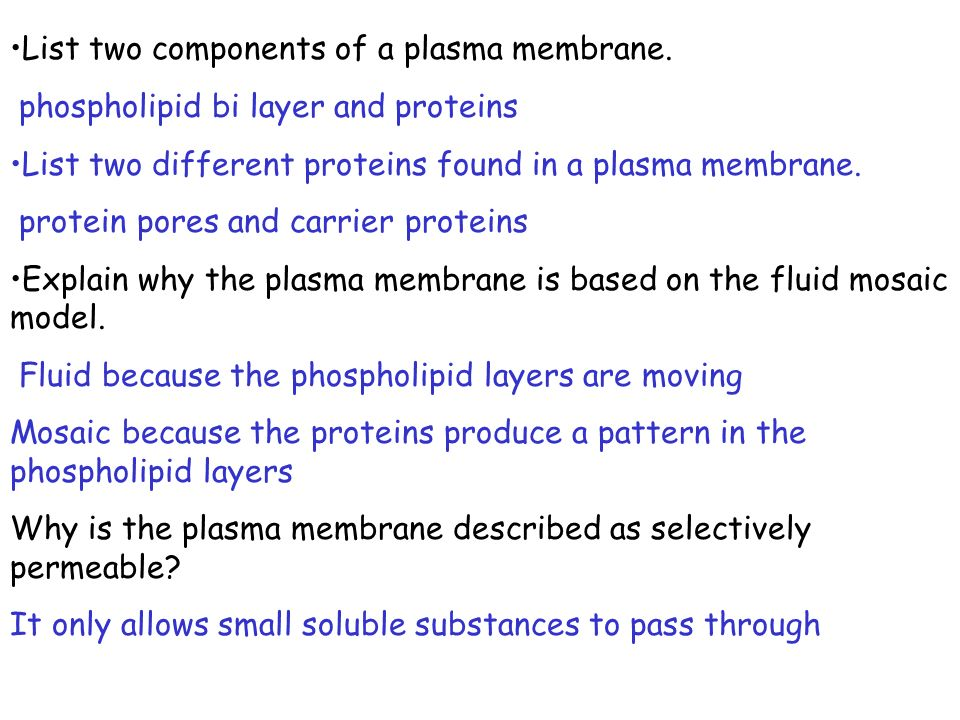 List two components of a plasma membrane.