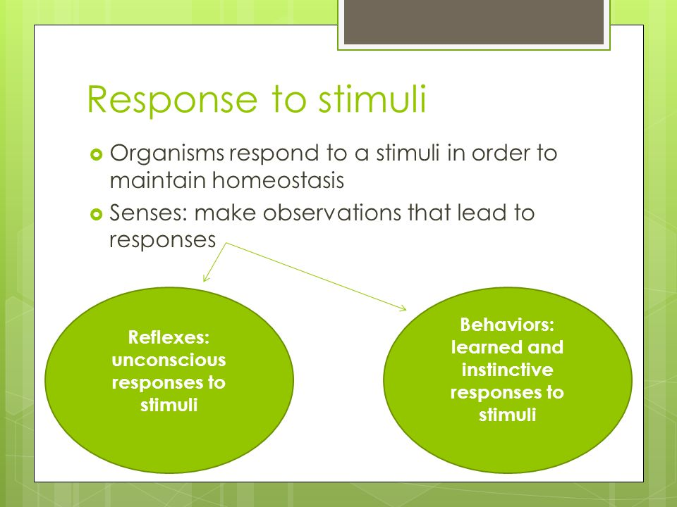 Response to stimuli  Organisms respond to a stimuli in order to maintain homeostasis  Senses: make observations that lead to responses Reflexes: unconscious responses to stimuli Behaviors: learned and instinctive responses to stimuli