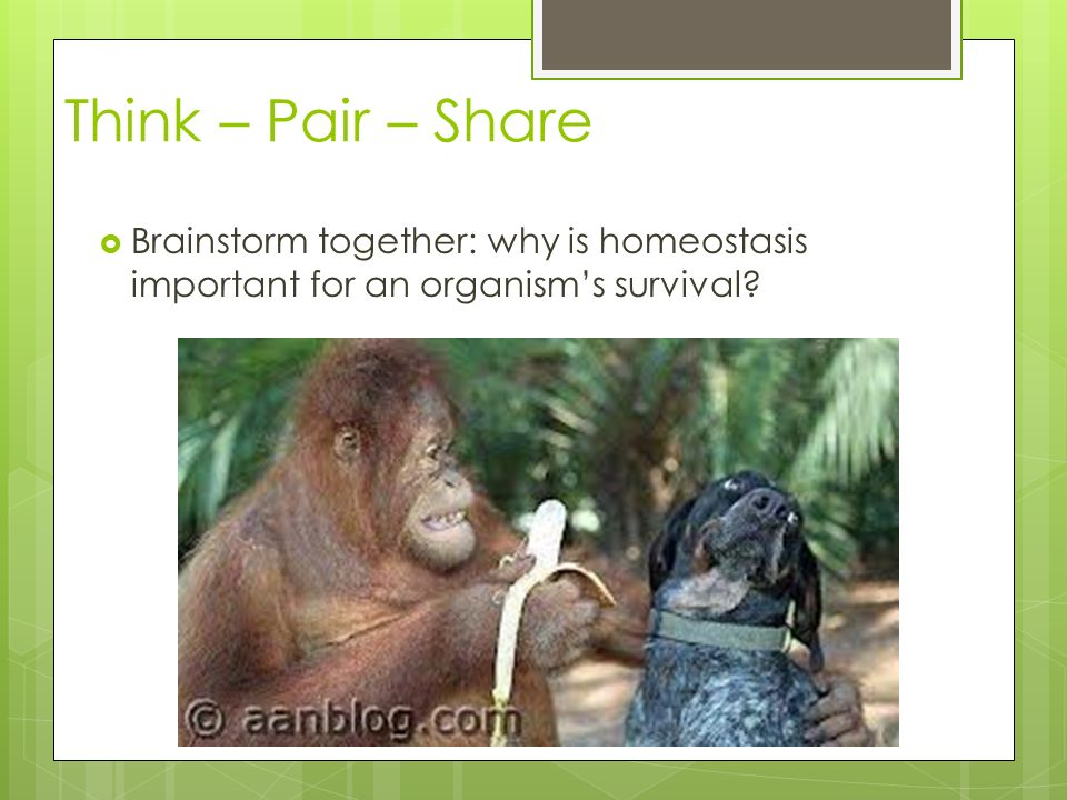 Think – Pair – Share  Brainstorm together: why is homeostasis important for an organism's survival