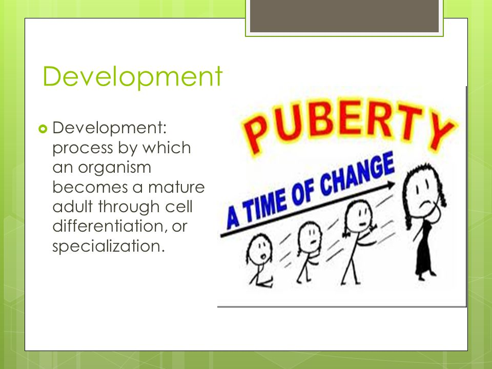Development  Development: process by which an organism becomes a mature adult through cell differentiation, or specialization.