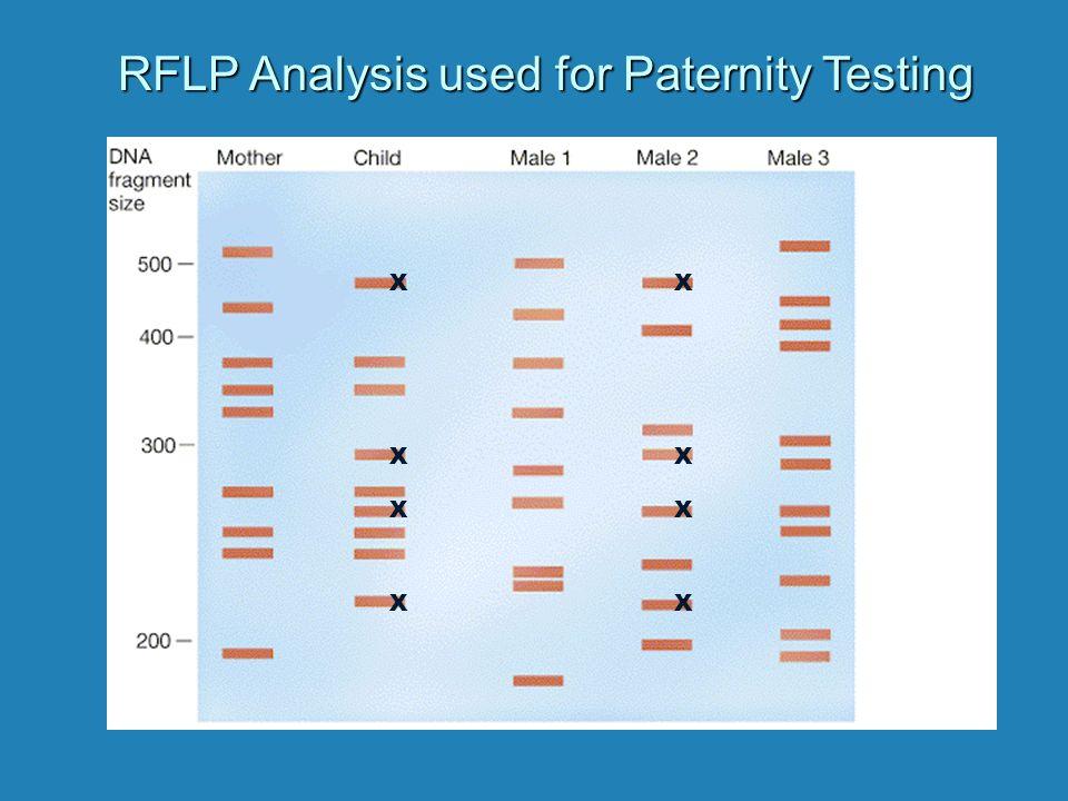 RFLP Analysis used for Paternity Testing X X X X X X X X
