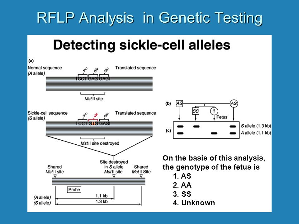 RFLP Analysis in Genetic Testing On the basis of this analysis, the genotype of the fetus is 1.