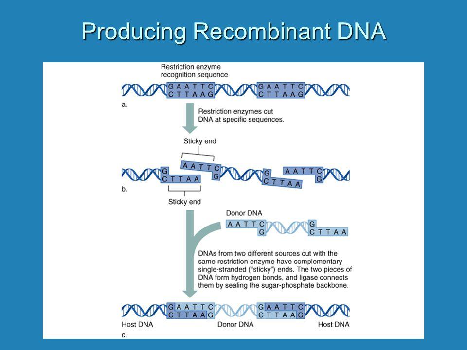 Producing Recombinant DNA