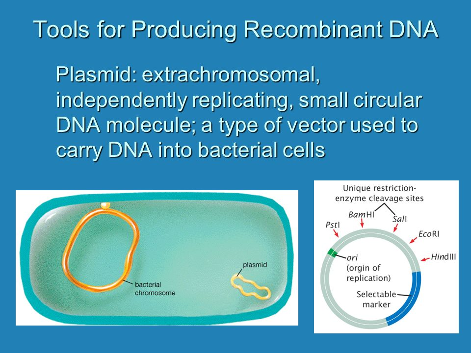 Tools for Producing Recombinant DNA Plasmid: extrachromosomal, independently replicating, small circular DNA molecule; a type of vector used to carry DNA into bacterial cells Plasmid: extrachromosomal, independently replicating, small circular DNA molecule; a type of vector used to carry DNA into bacterial cells
