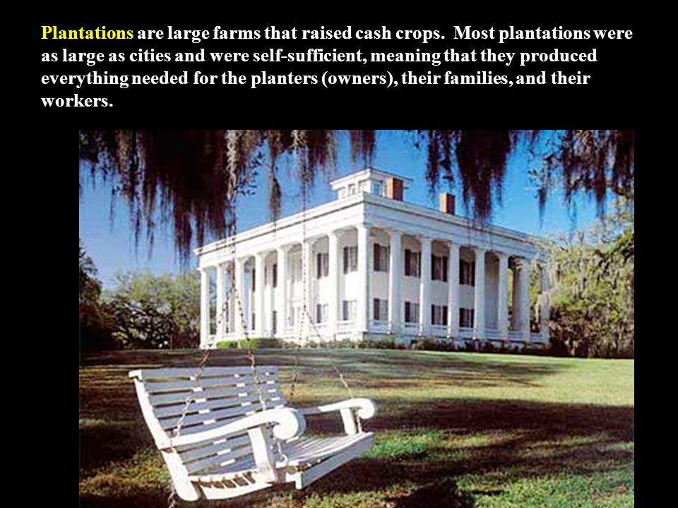 Plantations are large farms that raised cash crops.