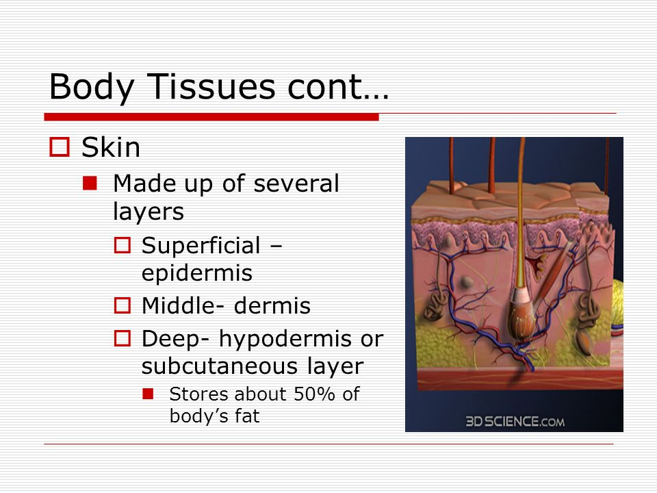 Luxury Mr Skin Anatomy Pattern Anatomy Ideas Yunokifo