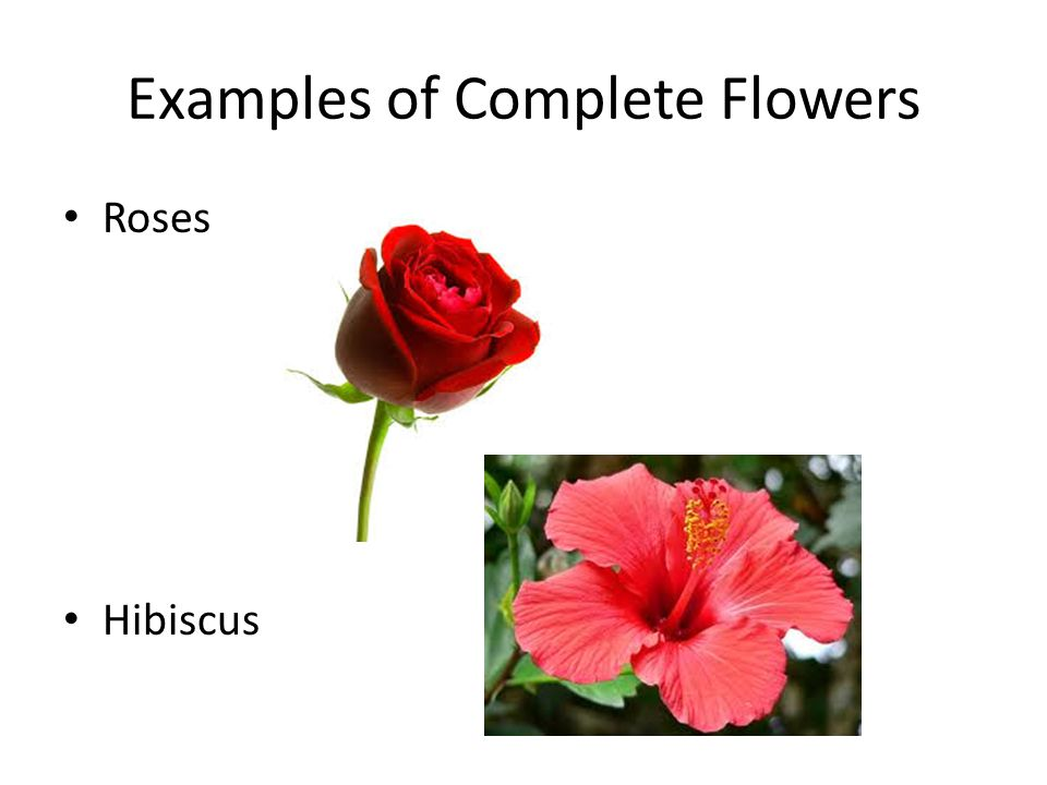Examples of Complete Flowers Roses Hibiscus